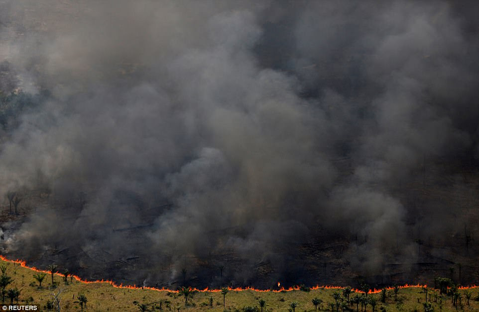 A forest burns during 'Operation Green Wave', which was conducted by agents of the Brazilian Institute for the Environment and Renewable Natural Resources to combat illegal logging in Apui, Brazil on August 4. In just one month the government destroyed 800 illegal ovens