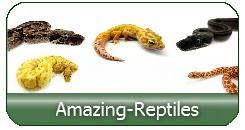 Amazing Reptiles High quality breeding