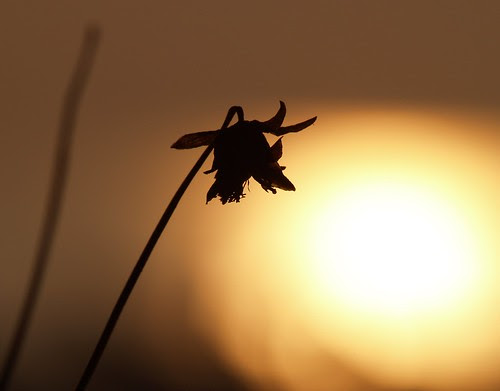Indian sunrise with flower
