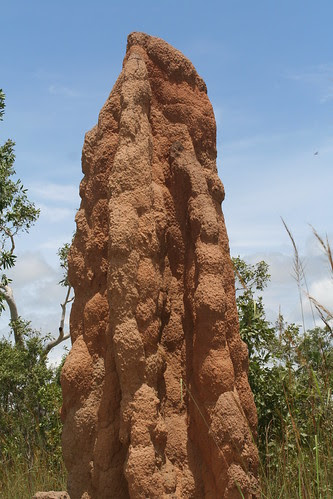 Magnetic Termite Mound, Litchfield