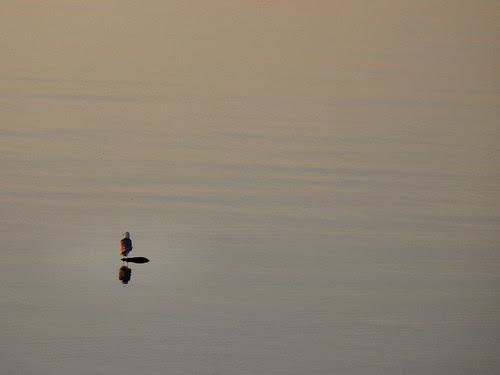 Sunrise Seagull - Mackinaw City/St. Ignace, Michigan 2010