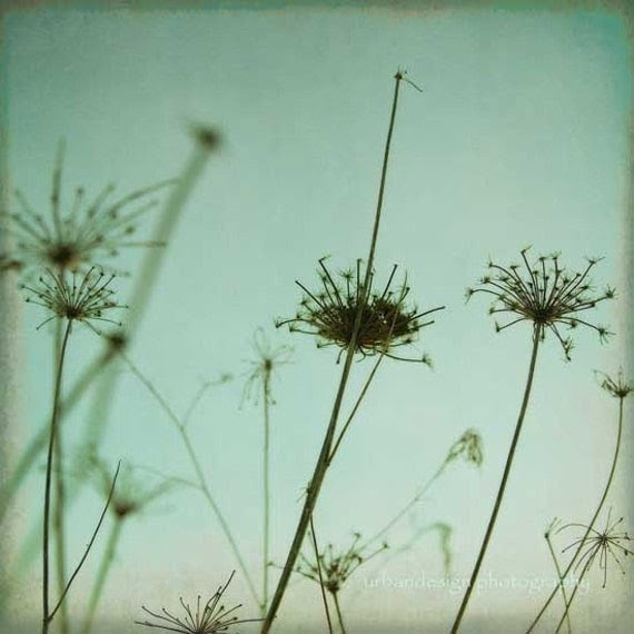 Black Queen Anne's Lace Silhouette Photography by MaleahTorney