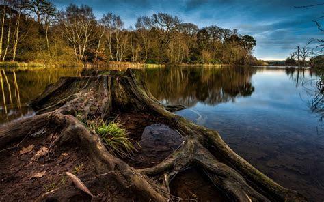 landscape super stump river trees cloudy sky reflecting