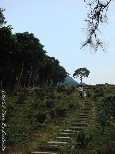 三峽親子遊|熊空休閒農場|熊空茶園步道