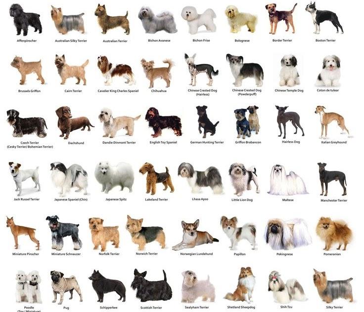 Dog Training Pdf In Telugu