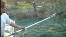 Αρχείο:Olive-picking with rotary tool and rake.ogv