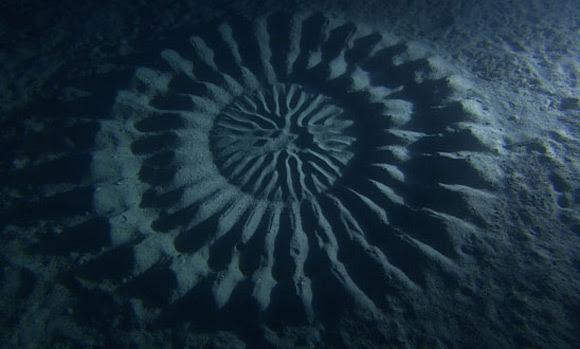 perierga.gr - Μυστηριώδη γεωμετρικά μοτίβα στο βυθό!