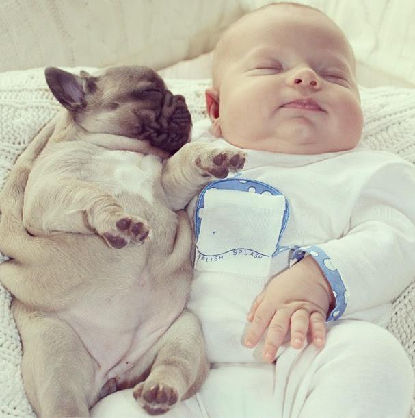 perierga.gr - Απίθανη σχέση ενός νεογέννητου με τρία κουτάβια παγκ!