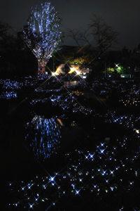 毛利庭園とその向こうのクリスマスツリー