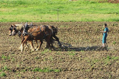 IMG_2461_Amish_Girl_&_Draft_Horses