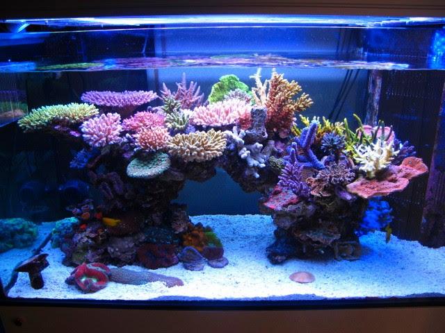 Aquascape Ideas Saltwater Aquarium Aquascape