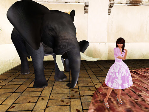 Zaara sim opening - Elephant!