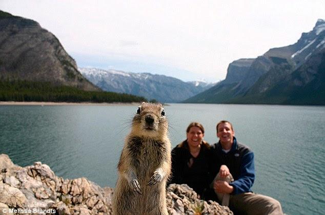 Squirrel Steals Spotlight