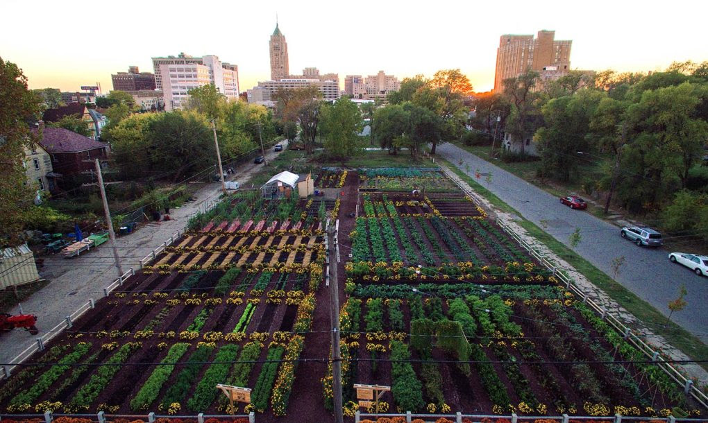 Image: New sustainable agriculture development in Detroit feeds 2,000 households for free