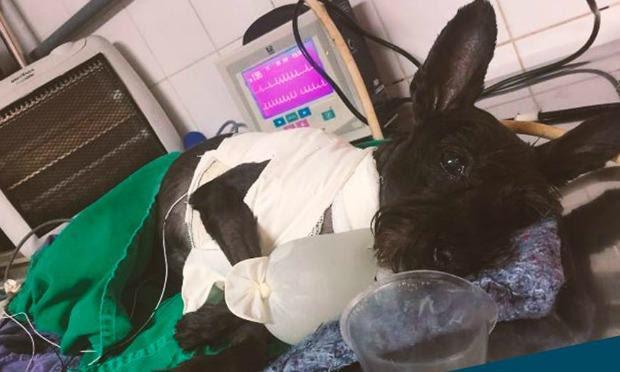 Submetida a uma cirurgia, Joana recebeu um marca-passo usado em humanos e agora leva uma vida normal / Foto: Facebook