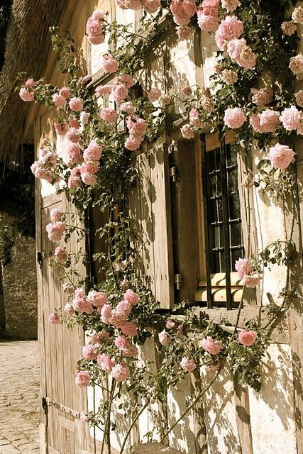 climbing roses: cottage inspiration