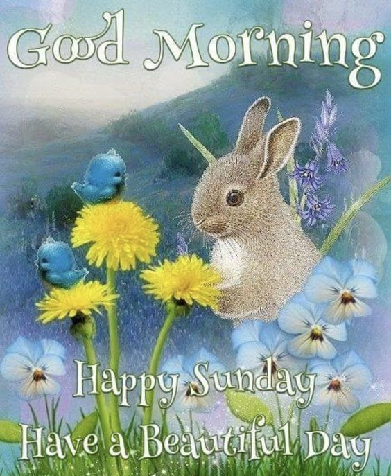 Bunny Good Morning Sunday Wishes Pictures Photos And Images For
