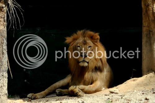 http://i599.photobucket.com/albums/tt74/yjunee/blogger/DSC_0546.jpg?t=1262677550