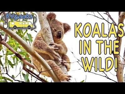 RV Geeks Australian Trip Part III: Koalas, Kangaroos & Brekky on the Barbie