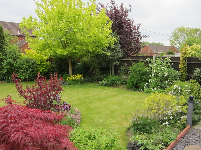 garden June 1st 2013 (13)