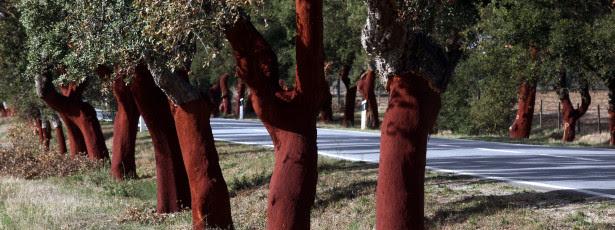 Floresta Comum já distribuiu 200 mil árvores autóctones