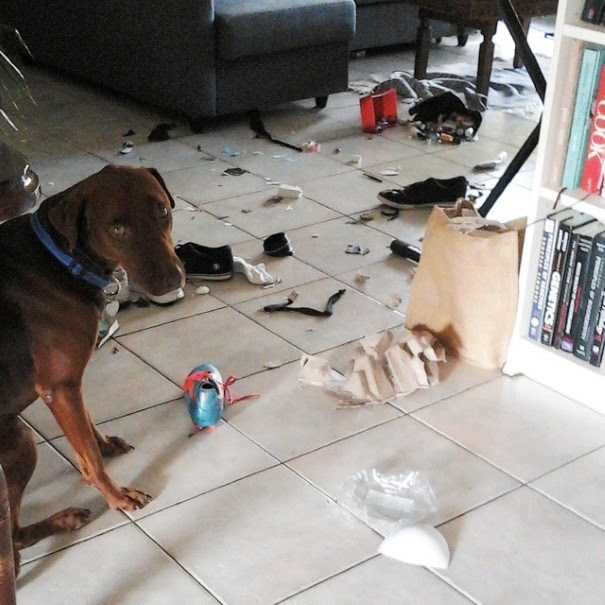 cachorro-envergonhado-7