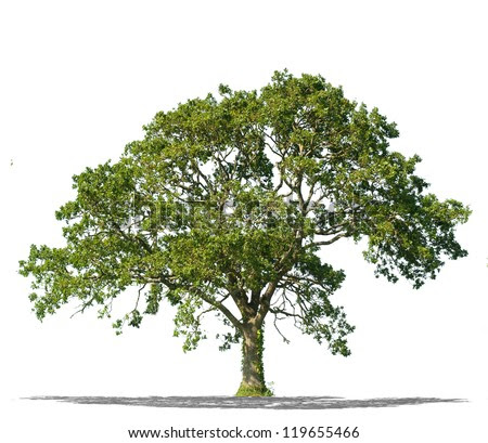 Beautifull Green Tree On A White Background In High Definition ...
