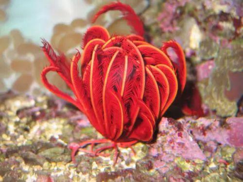 اغرب طرق التغذية لبعض الكائنات البحرية