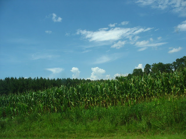 my world a corn IMG_2407