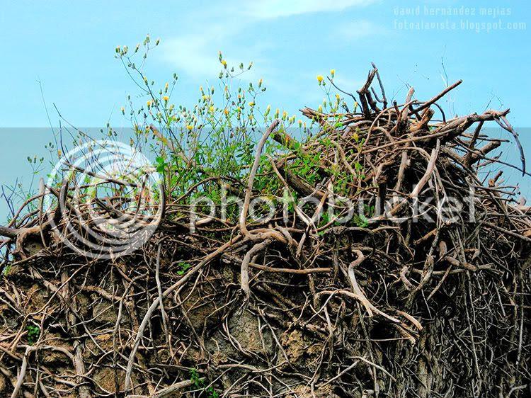 Flores, ramas secas, raíces sobre los muros y la tierra de la anciana y vulcanizada ciudad romana de Pompeya, Italia