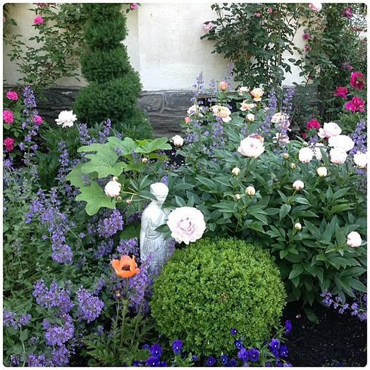 An Affinity For Roses In My Front Garden Garden Ideas