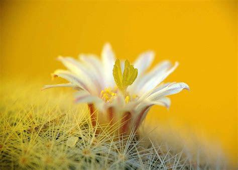 cactus desktop background pixelstalknet