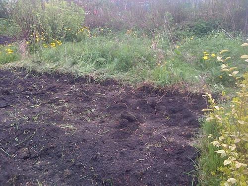 potato planting May 13 6