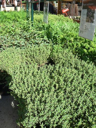 herbes 1.jpg