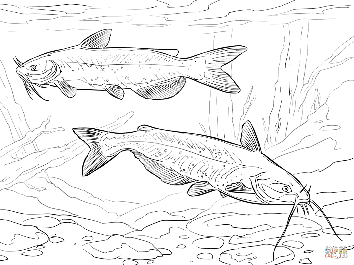 Catfish Coloring Page Colordad Sketch Coloring Page