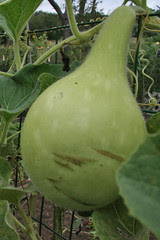 another gourd
