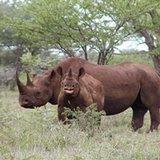 news-national-20131031-US-Rhino-Hunt-Auction
