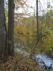 River and Leaves