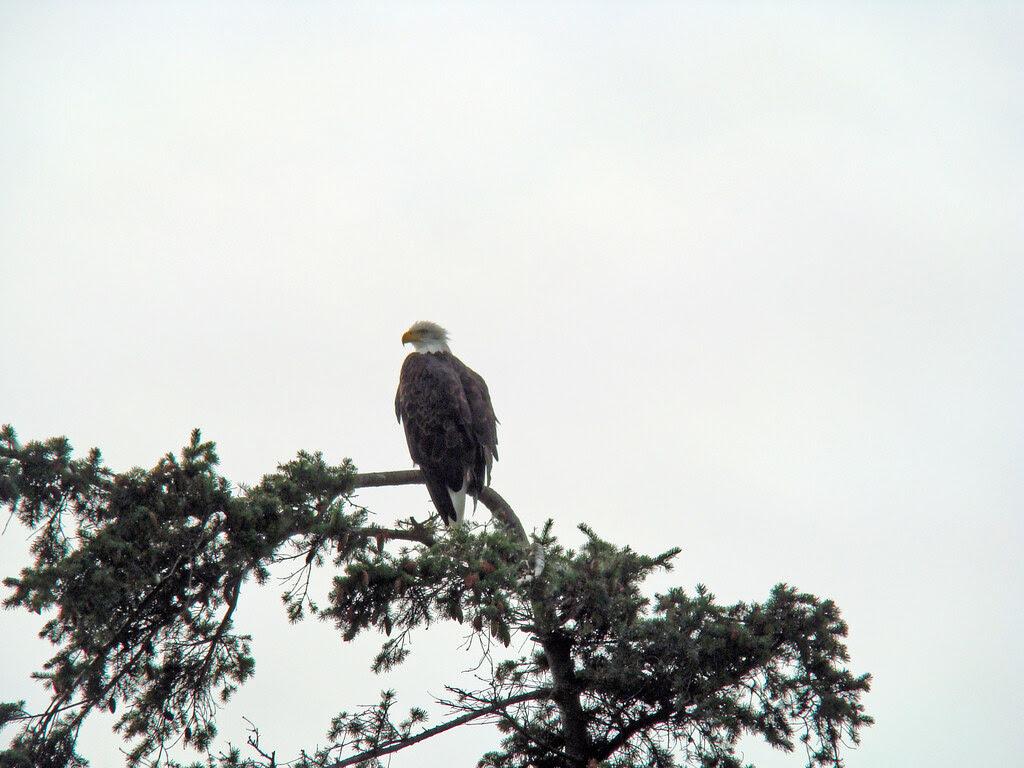 2009-08-17 Cadboro Bay 034
