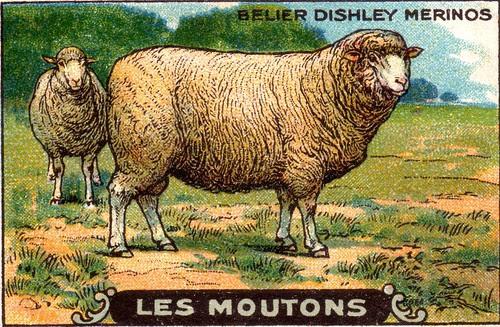 mouton 6