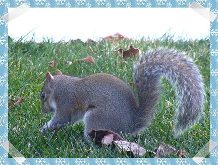 Squirrel hiding a peanut