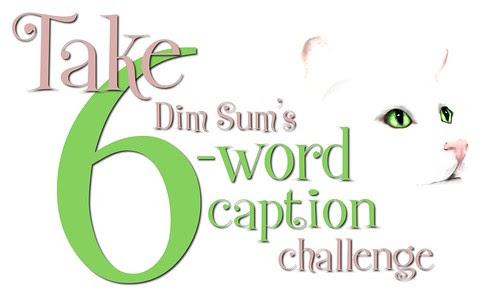 Take Dim Sum's 6-Word Caption Challenge