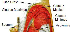 muscle spasm in glute