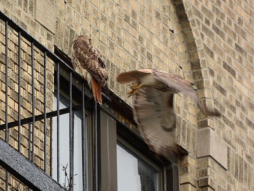 Washington Heights Hawks