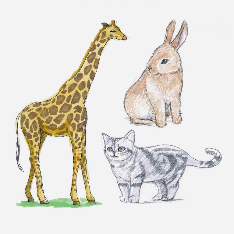 イラストの描き方動物編 Ochabi Artgym 社会人のためのデッサン
