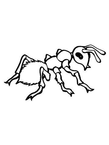 Dibujo De Hormiga De Perfil Para Colorear Dibujos Para Colorear