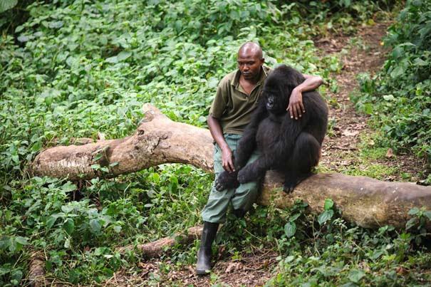 Οι 50 καλύτερες φωτογραφίες ζώων του 2012 (15)