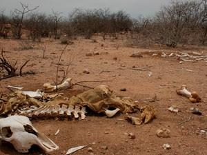 Cemitério de animais mortos pela seca em Lajes, RN (Foto: Rafael Barbosa/G1)