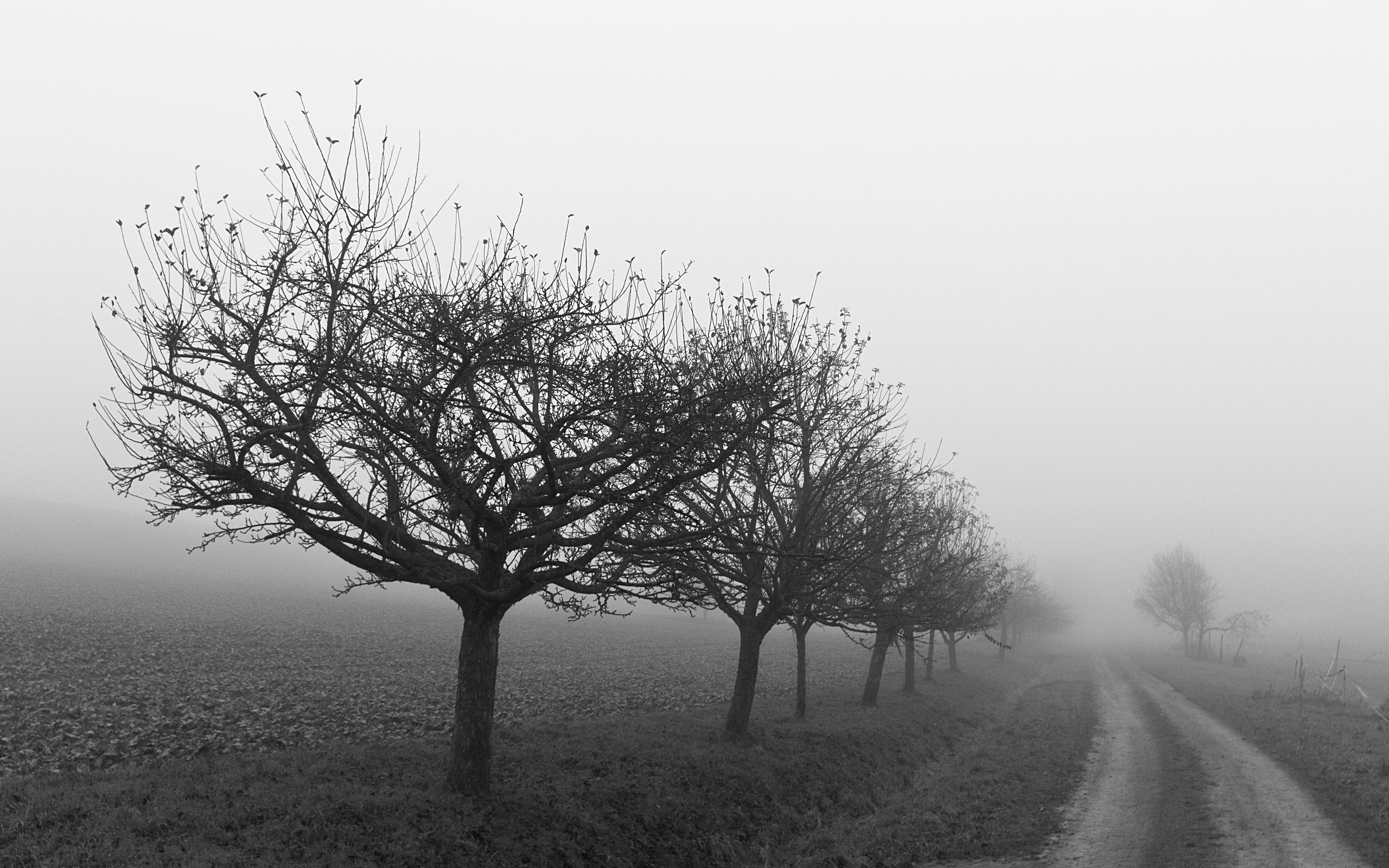 Black And White Images Of Trees 12 Background Wallpaper