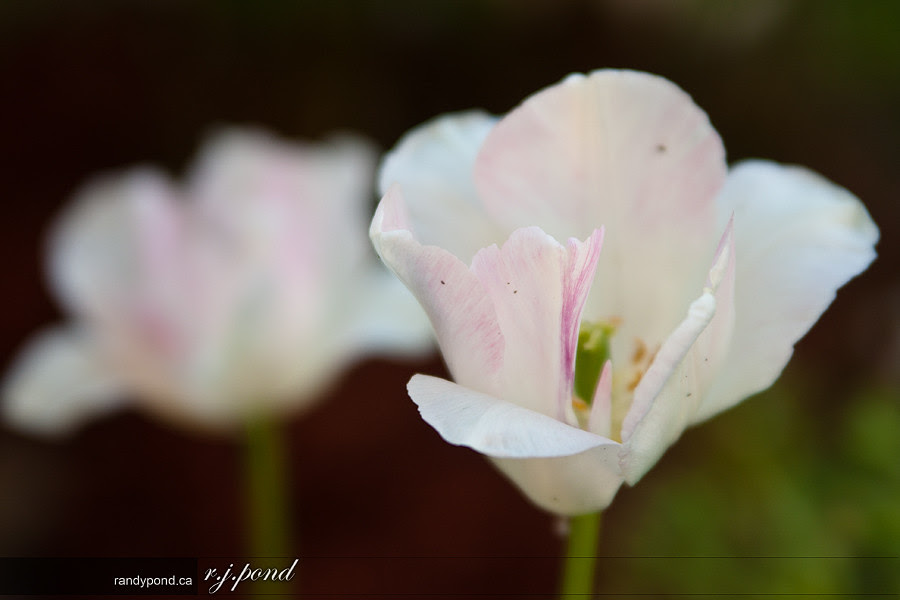 ~ 164/365 Flower ~
